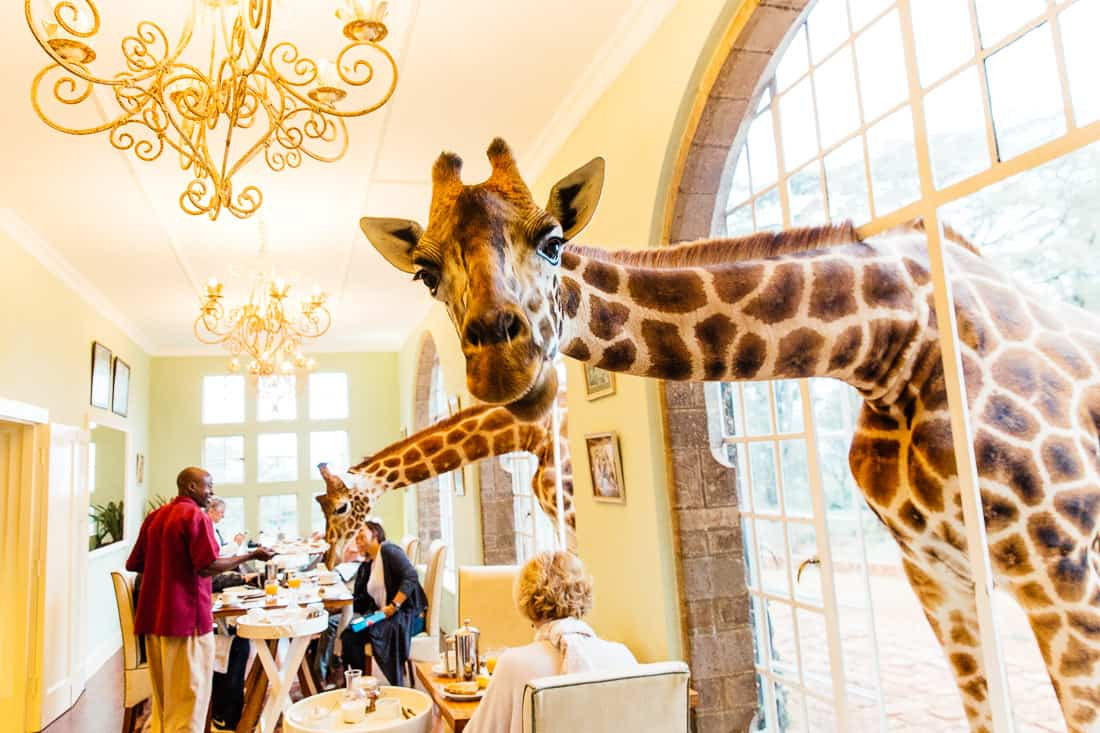 giraffe manor nairobi kenya travel hotel photography 22 1