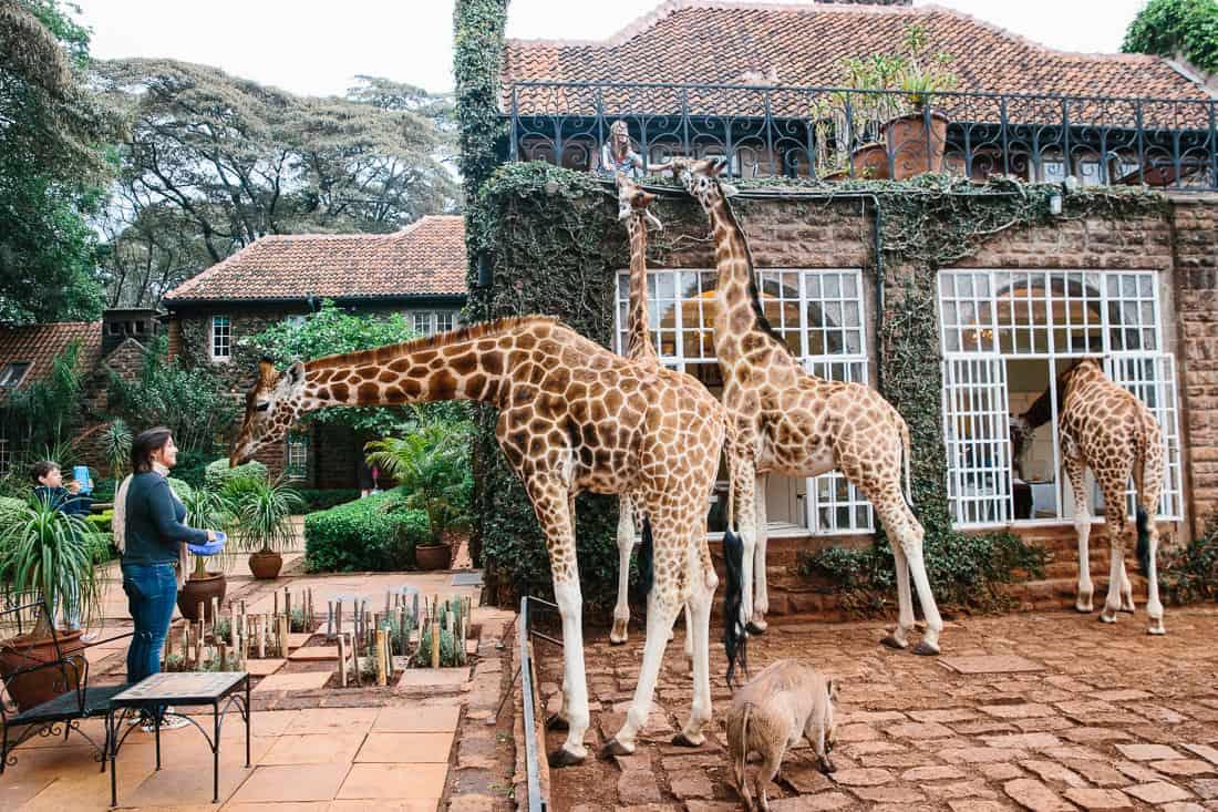 giraffe manor nairobi kenya travel hotel photography 26 1