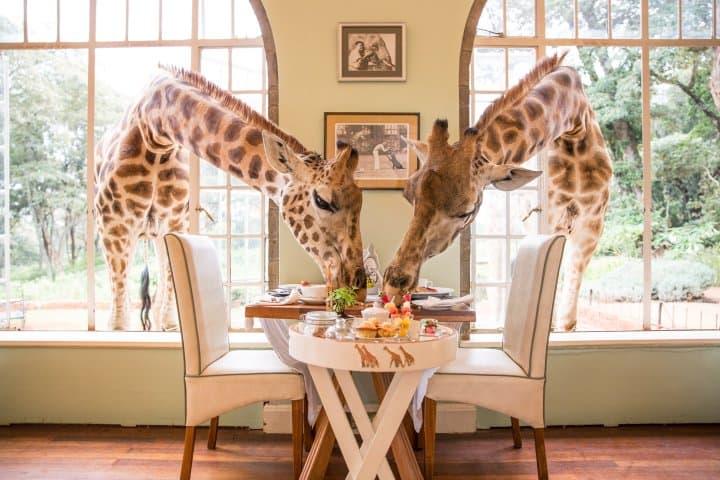 giraffe manor nairobi worlds greatest places 2018