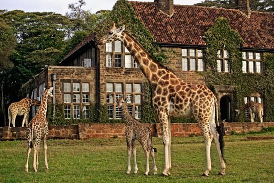 kenya_giraffe_manor_1