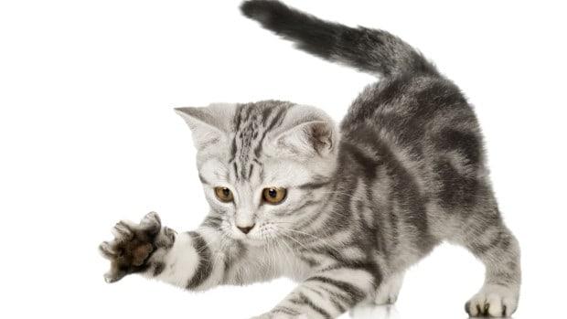 котка1