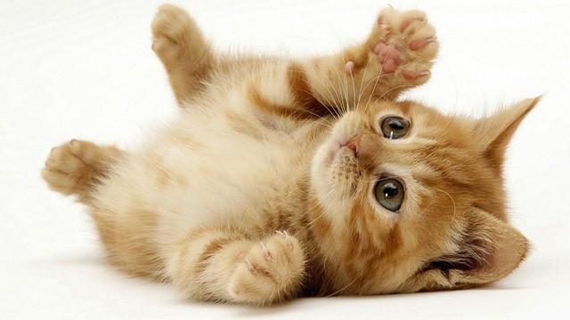 котка2