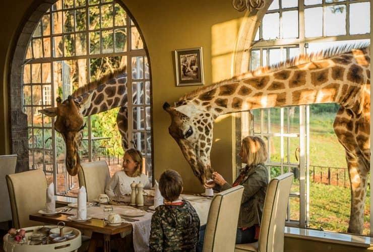 Giraffe Breakfast in the Sunroom at Giraffe Manor 740x500