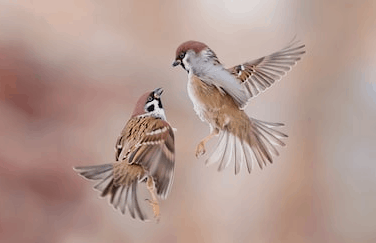 Screenshot_2019 03 16 sparrow Google Search