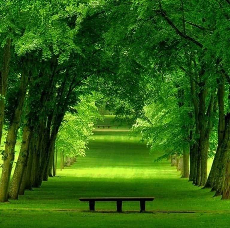 grass lush park greenery green france beautiful chamrande trees 3d wallpaper 768x761