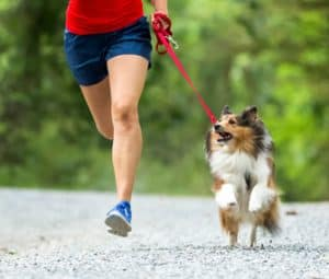 jogging with sheltie thinkstockphotos 534541239 335 300x255