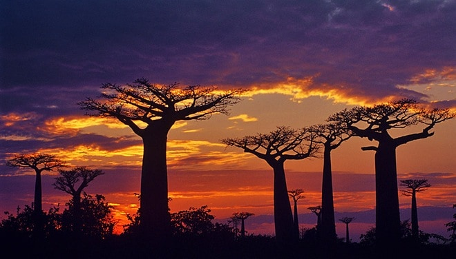 the island of madagascar interesting facts_1