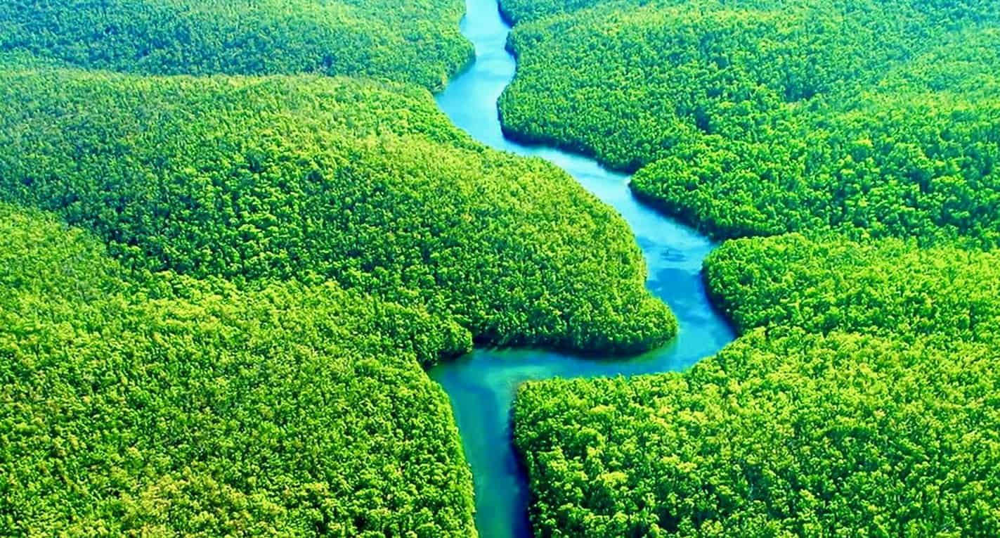 Amazon Rainforest 1