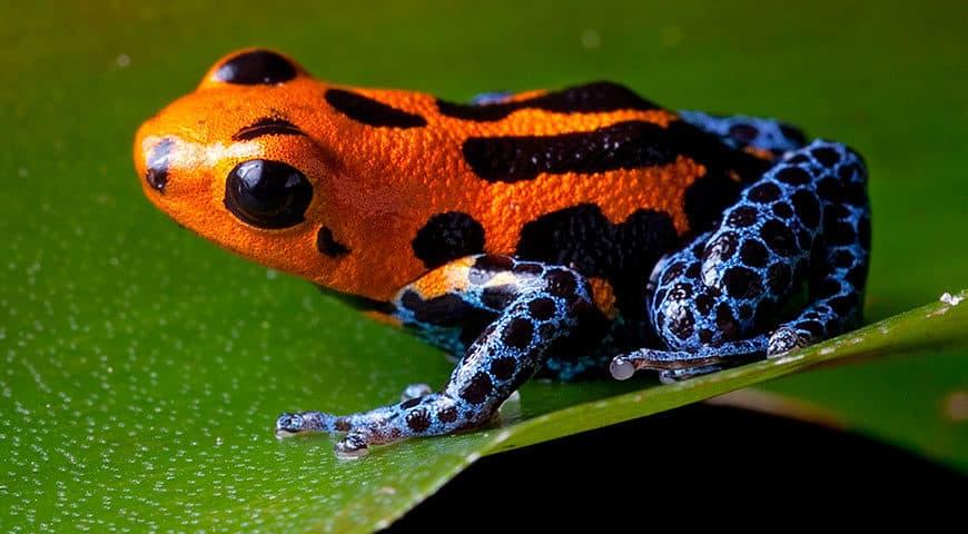 the five rarest Amazon rainforest animals4 870x480