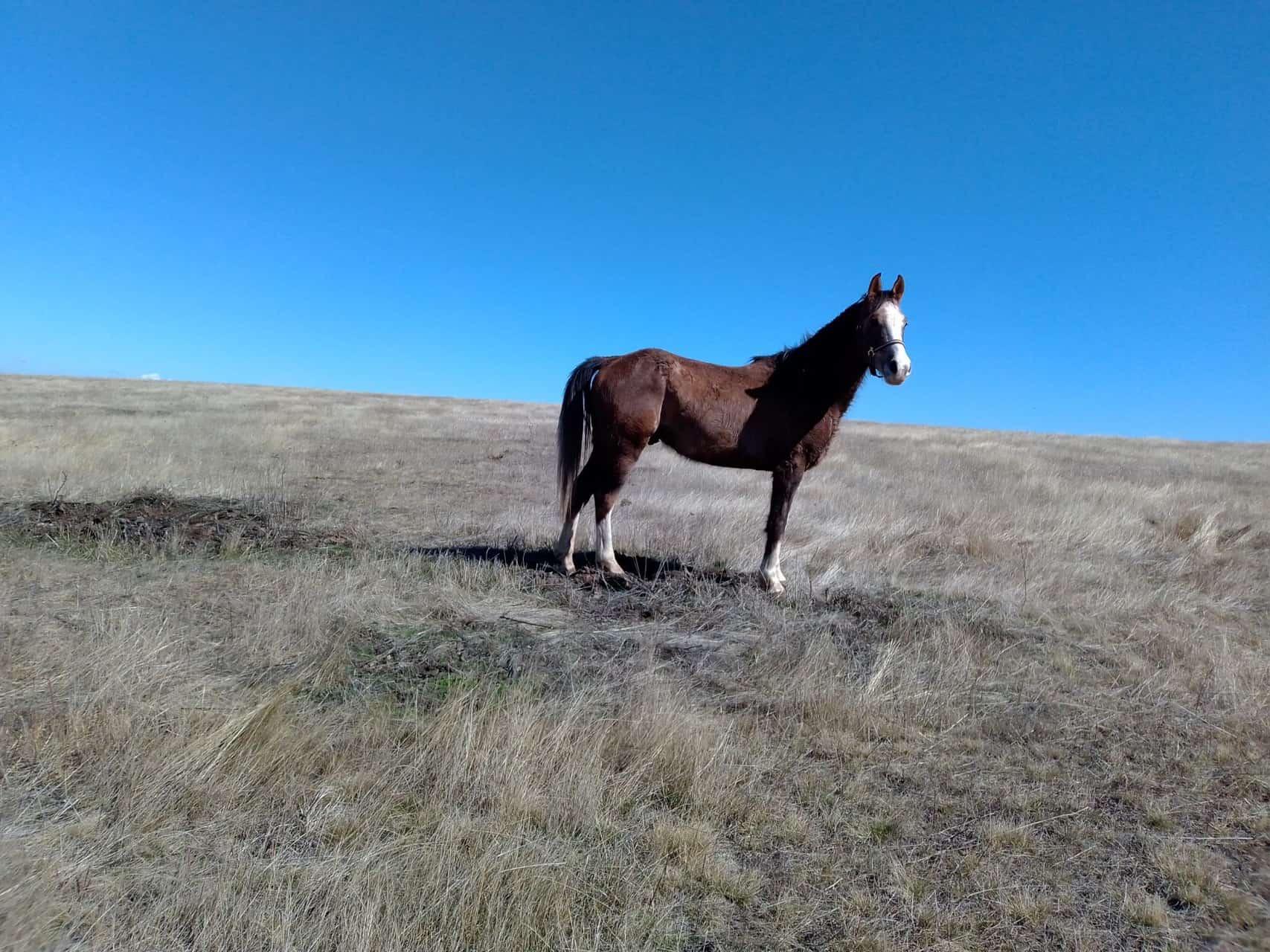 терапия с коне 3