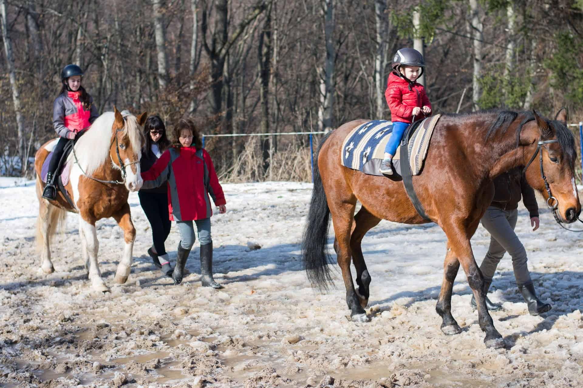 терапия с коне 4