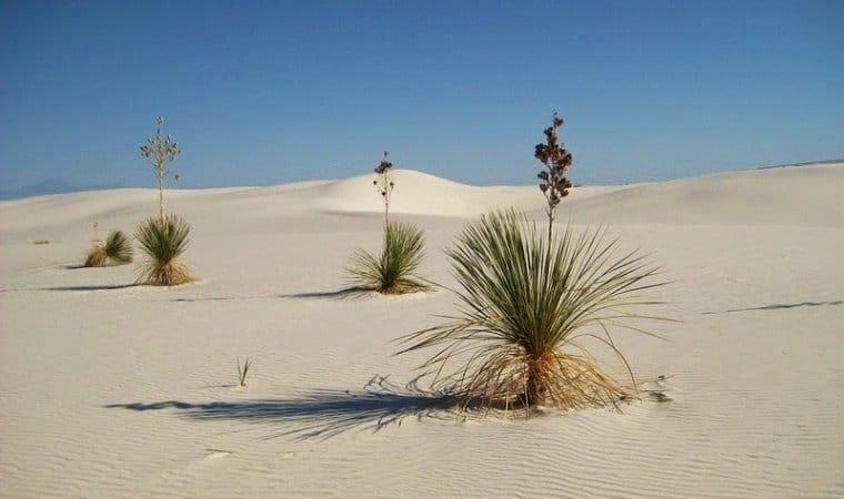 Белите пясъци 1