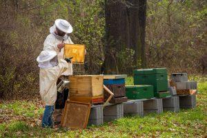 мед от български пчелари
