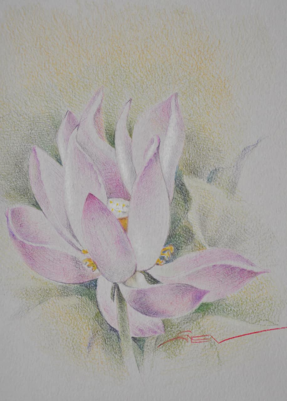 lotus from the garden  3_27х17см